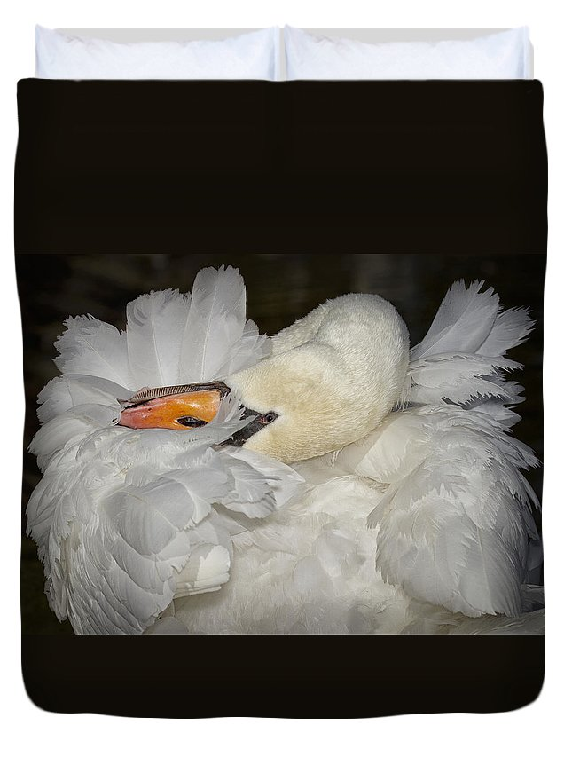 Swan Feathers And Fluff During Preening. Duvet Cover featuring the photograph Swan Preening by Sherry Butts