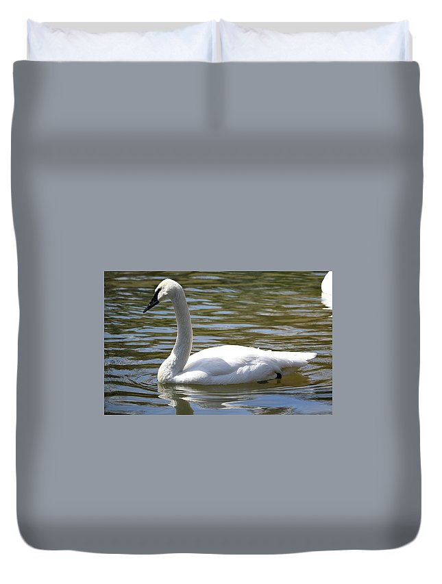 Wildlife Duvet Cover featuring the photograph Swan by Shelley Wilson