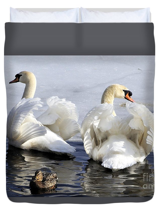 Swan Duvet Cover featuring the photograph Swans And Duck by Mike Batson Photography