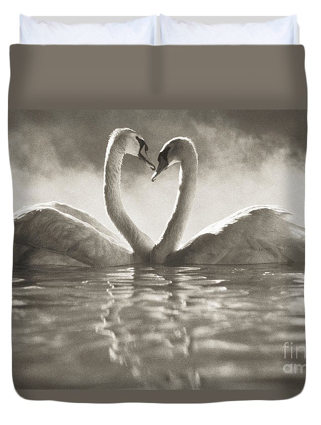 Afternoon Duvet Cover featuring the photograph Swans In Lake by Brent Black - Printscapes