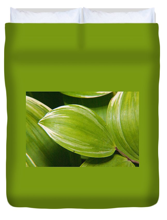 Plant Duvet Cover featuring the photograph Sweeping Green by Douglas Barnett