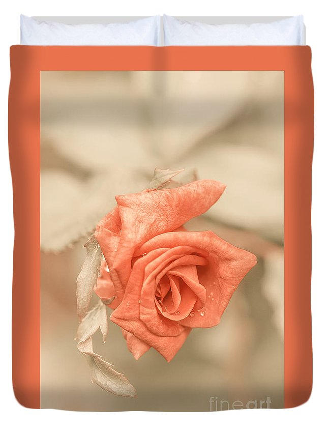 Rose Duvet Cover featuring the photograph Sweet Sensation by Charuhas Images