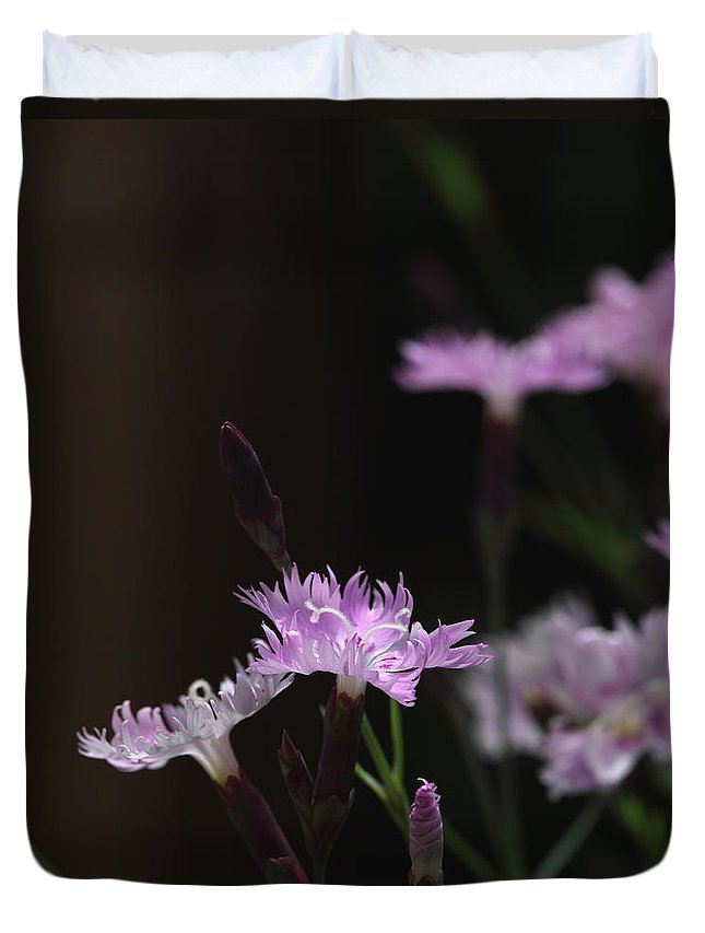 Sweet Williams Duvet Cover featuring the photograph Sweet Williams by Michael Dougherty