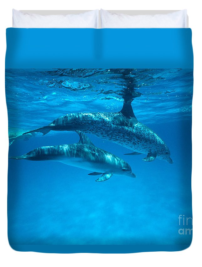 Bahama Duvet Cover featuring the photograph Swimming Dolphins by Ed Robinson - Printscapes