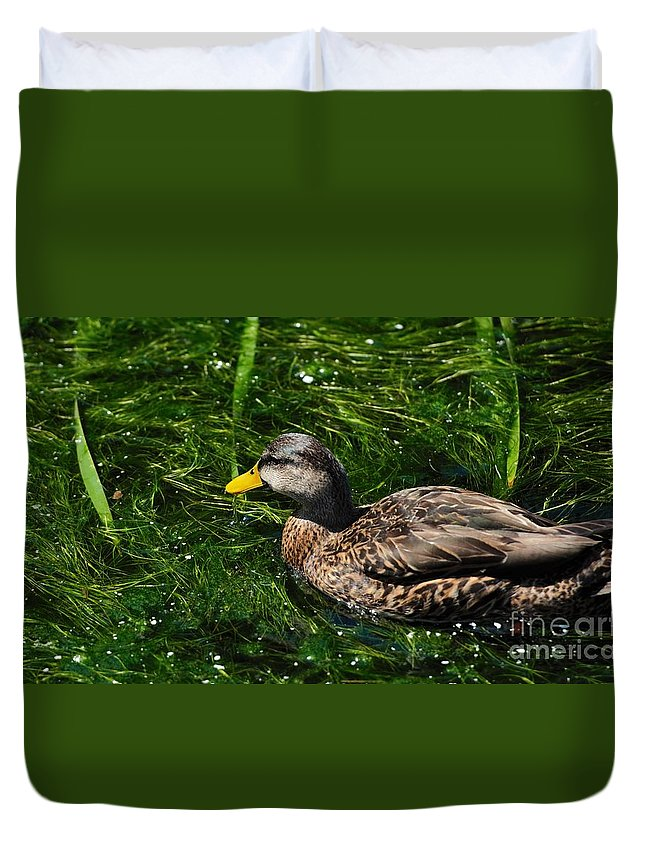 Duck Duvet Cover featuring the photograph Swimming In The Grass by Pamela Blizzard