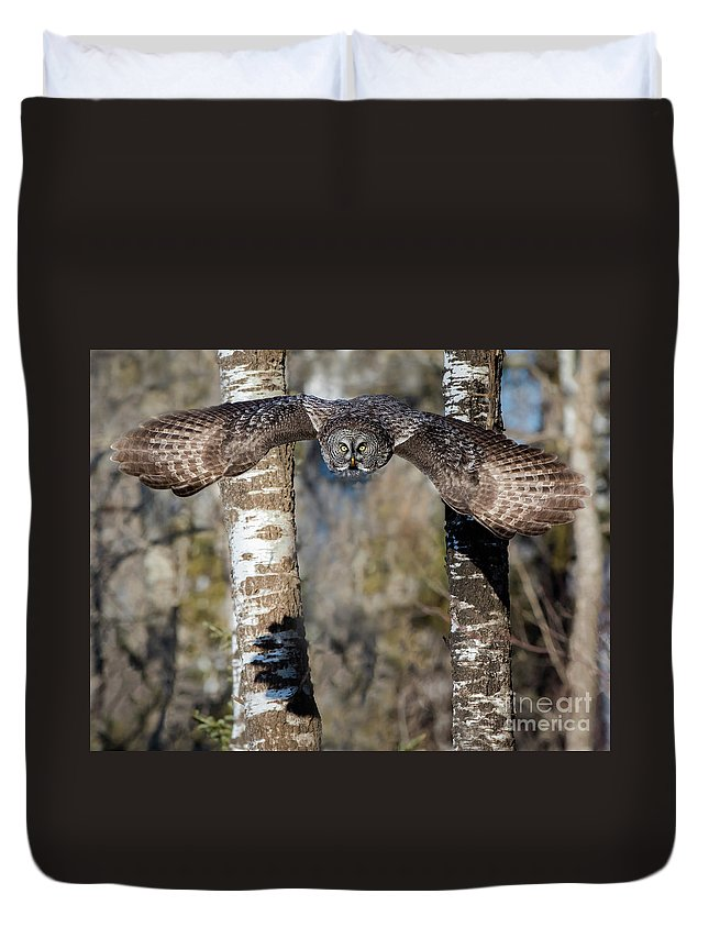 Ggo Duvet Cover featuring the photograph Swoop by Rudy Viereckl