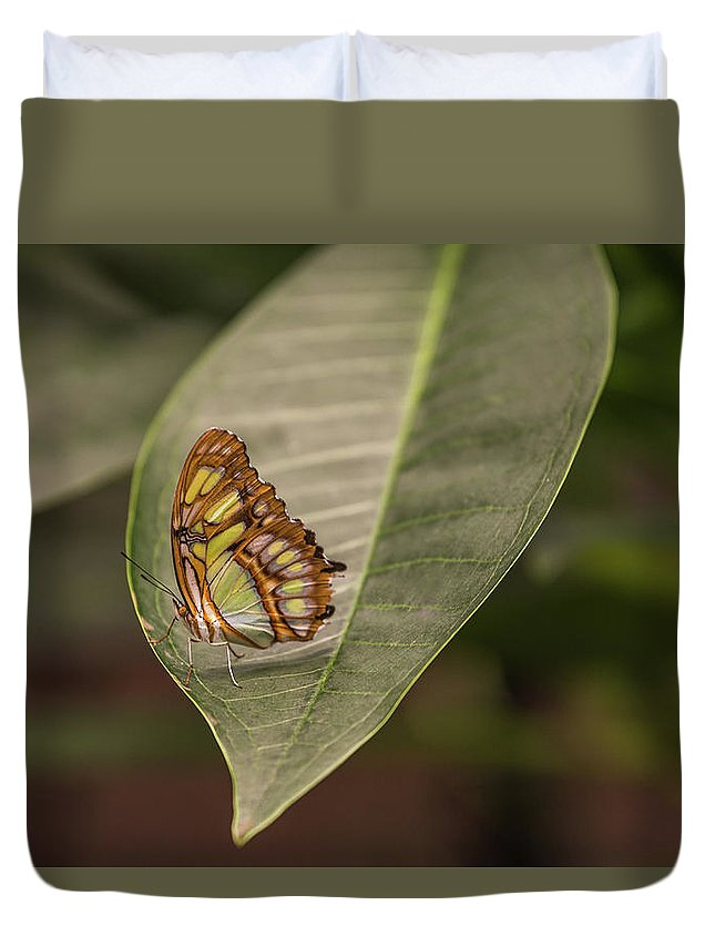Parthenos Sylvia Duvet Cover featuring the photograph Sylvia by Calazone's Flics