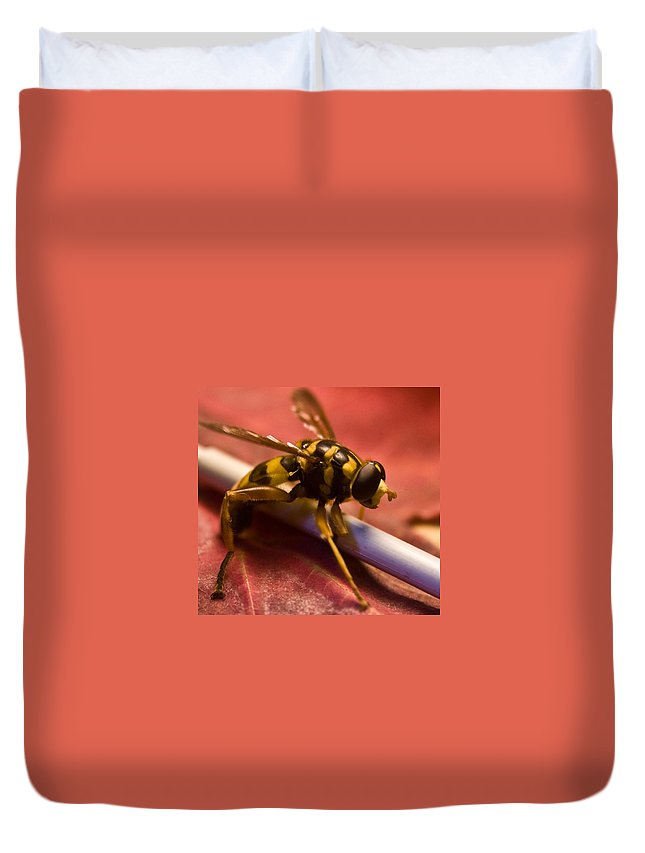 Insect Duvet Cover featuring the photograph Syrphid Fly Poised by Douglas Barnett