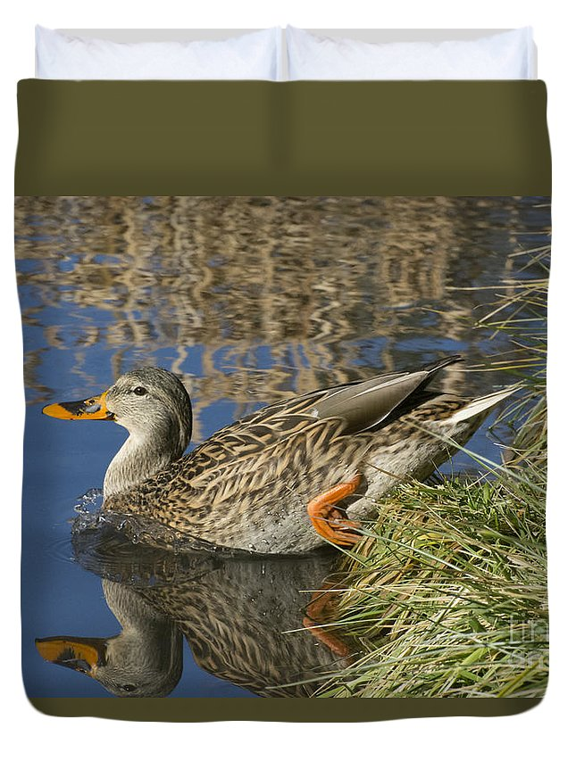 Mallard Duvet Cover featuring the photograph Take The Plunge by Merrimon Crawford