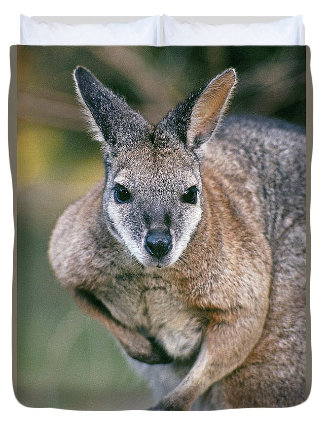 Alert Duvet Cover featuring the photograph Tamma Wallaby by Greg Vaughn - Printscapes