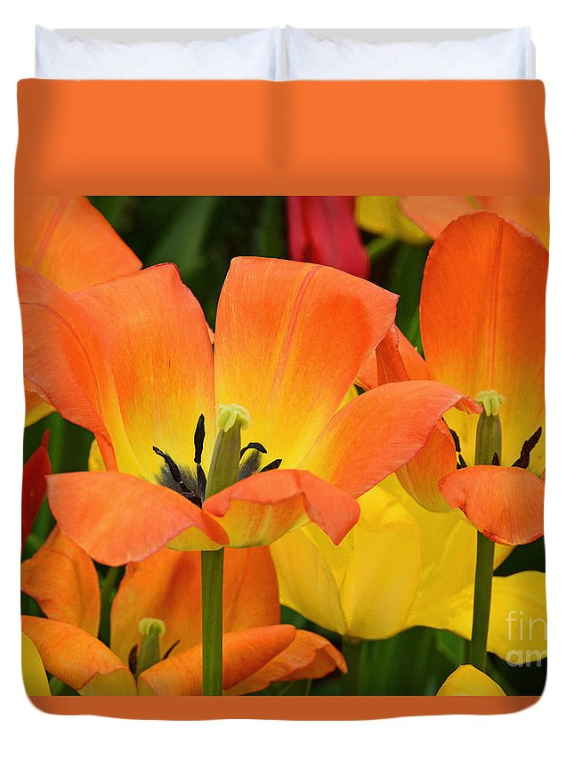 Tulip Duvet Cover featuring the photograph Tantalizing Tulips by Regina Geoghan