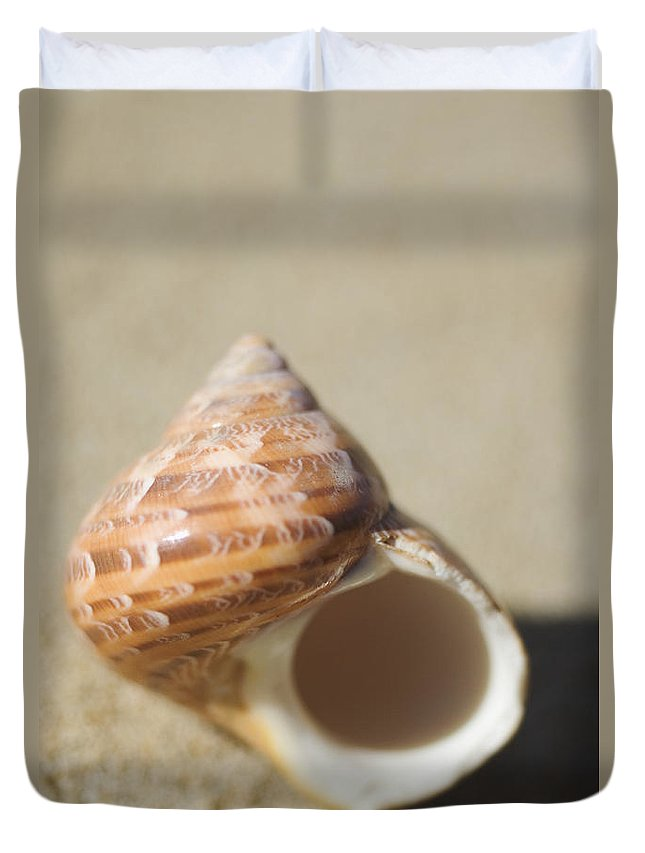 Background Duvet Cover featuring the photograph Tapestry Turban Seashell by Mary Van de Ven - Printscapes