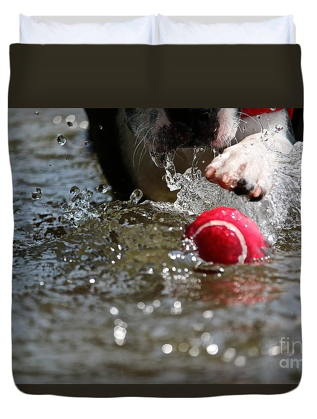 Boston Terrier Duvet Cover featuring the photograph Targeted by Susan Herber