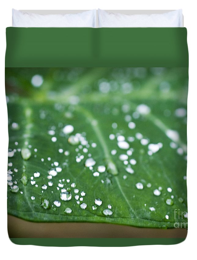 Abstract Duvet Cover featuring the photograph Taro Leaf by Allan Seiden - Printscapes