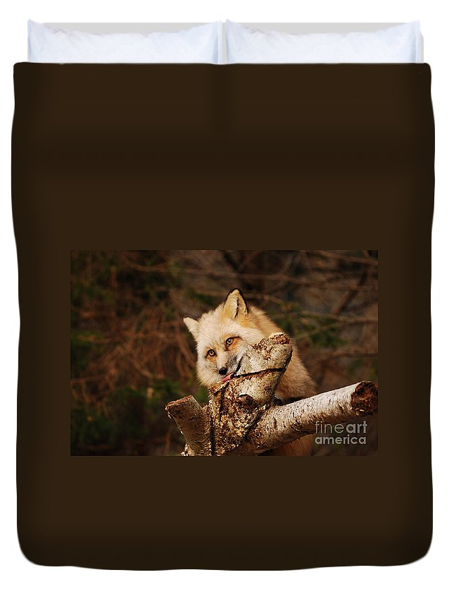 Fox Duvet Cover featuring the photograph Tasty by Lori Tambakis