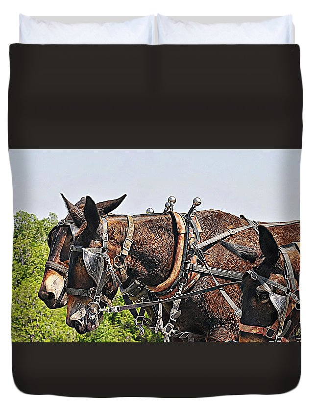 Mules Duvet Cover featuring the photograph Team Work by Diana Cannon