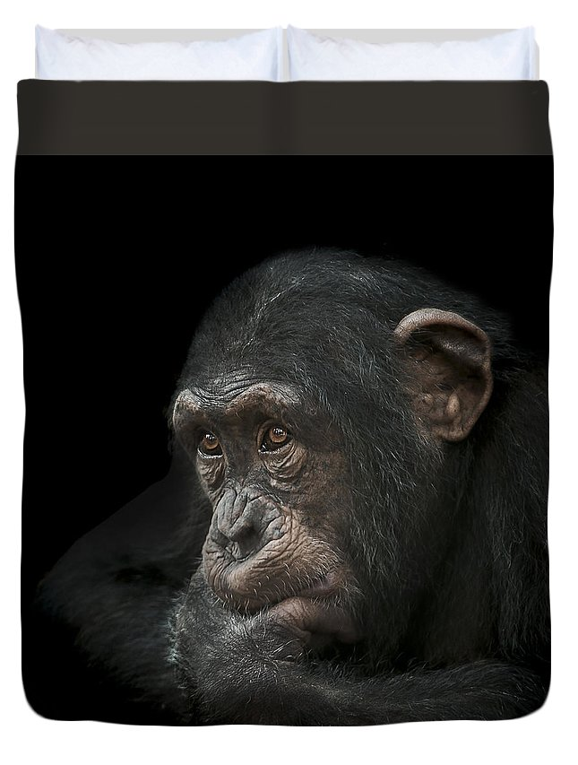 Chimpanzee Duvet Cover featuring the photograph Tedium by Paul Neville