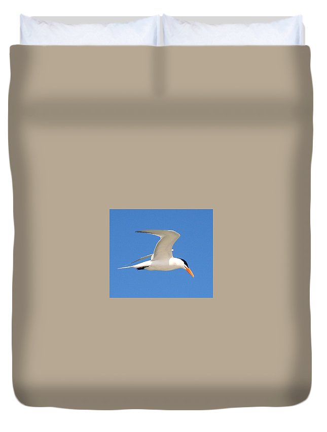 Tern Duvet Cover featuring the photograph Tern by Delphine Ross