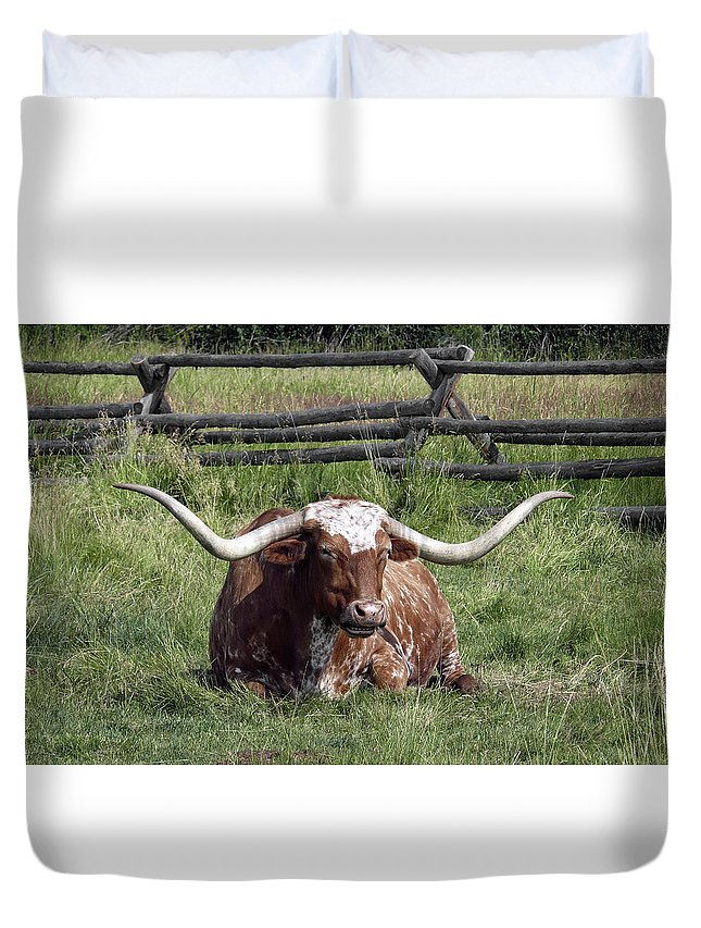 Longhorn Duvet Cover featuring the photograph Texas Longhorn Bull At Rest by Daniel Hagerman