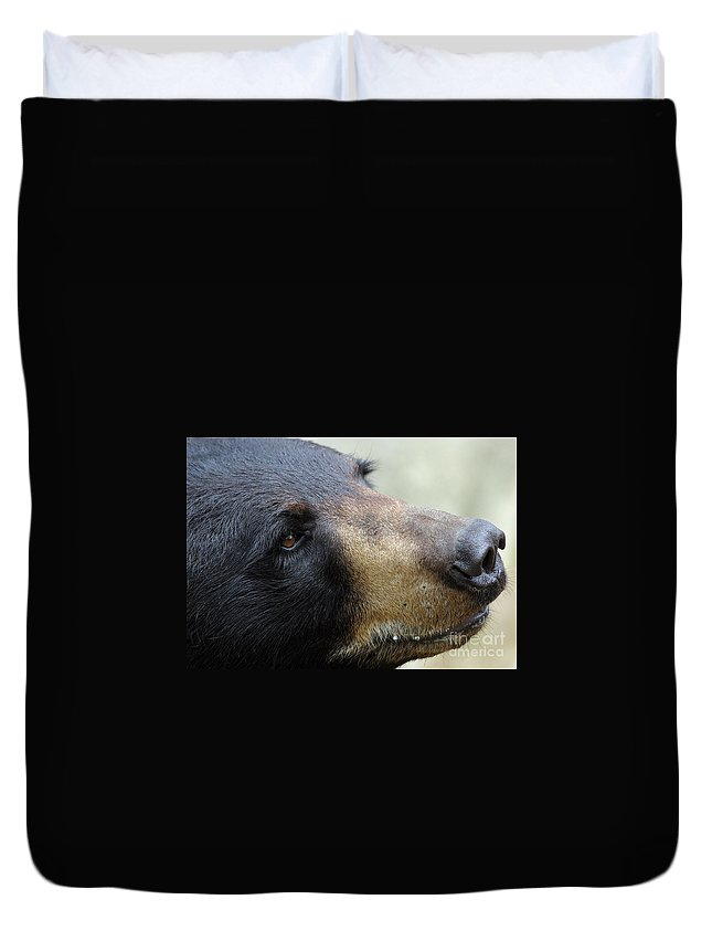 Bear Duvet Cover featuring the photograph That Face by Karol Livote