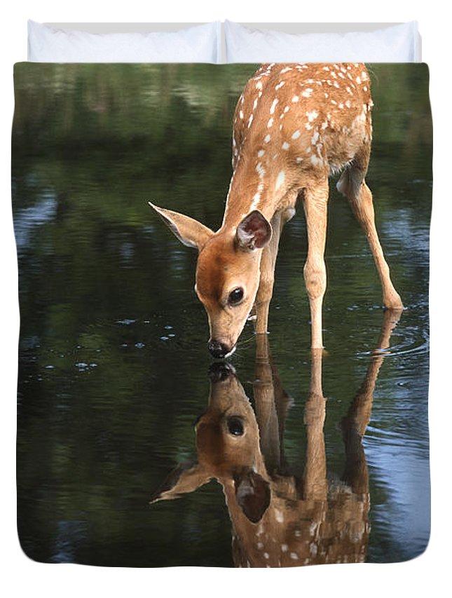 White Tailed Deer Photographs Duvet Covers