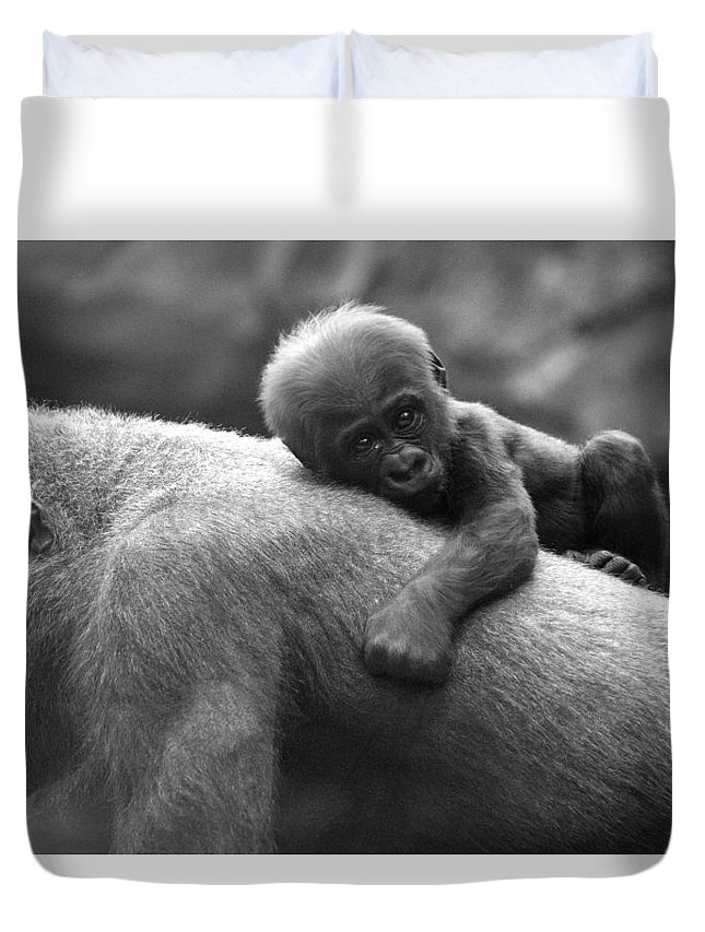 Gorilla Duvet Cover featuring the photograph That's My Mommy by Jake Danishevsky