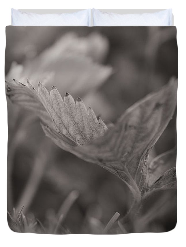 Plant Duvet Cover featuring the photograph The Allotment Project - Strawberry Plant by Clayton Bastiani