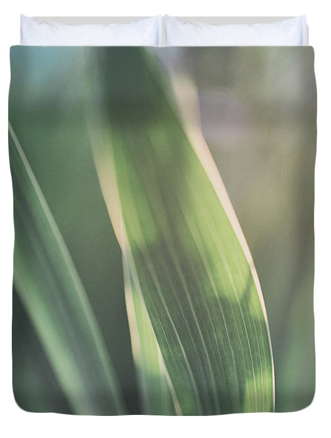Allotment Duvet Cover featuring the photograph The Allotment Project - Sweetcorn Leaves by Clayton Bastiani