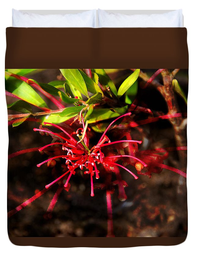 Red Spider Flower Duvet Cover featuring the photograph The Art Of Spider Flower by Miroslava Jurcik