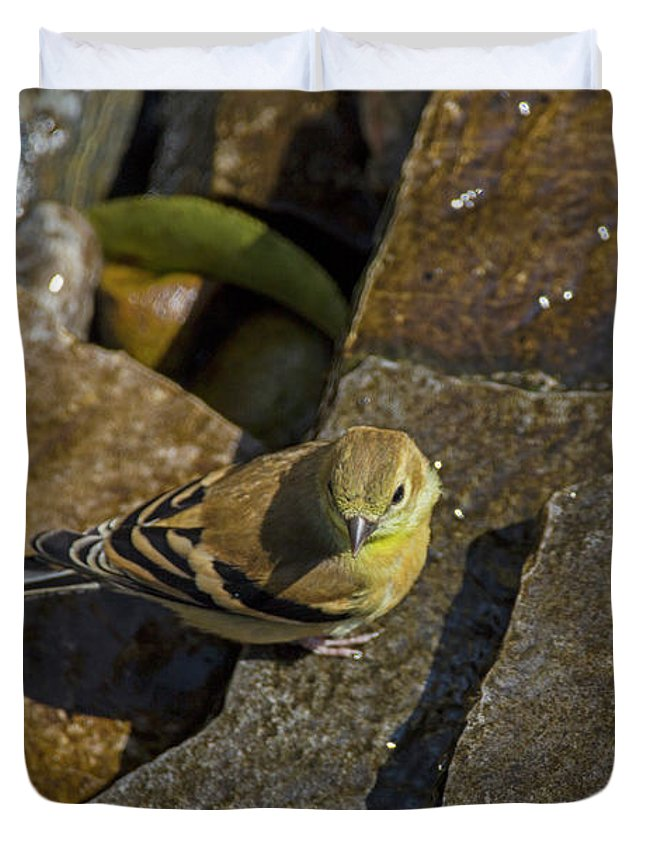 Yellow Duvet Cover featuring the photograph The Bath - American Goldfinch - Spinus Tristis by Spencer Bush