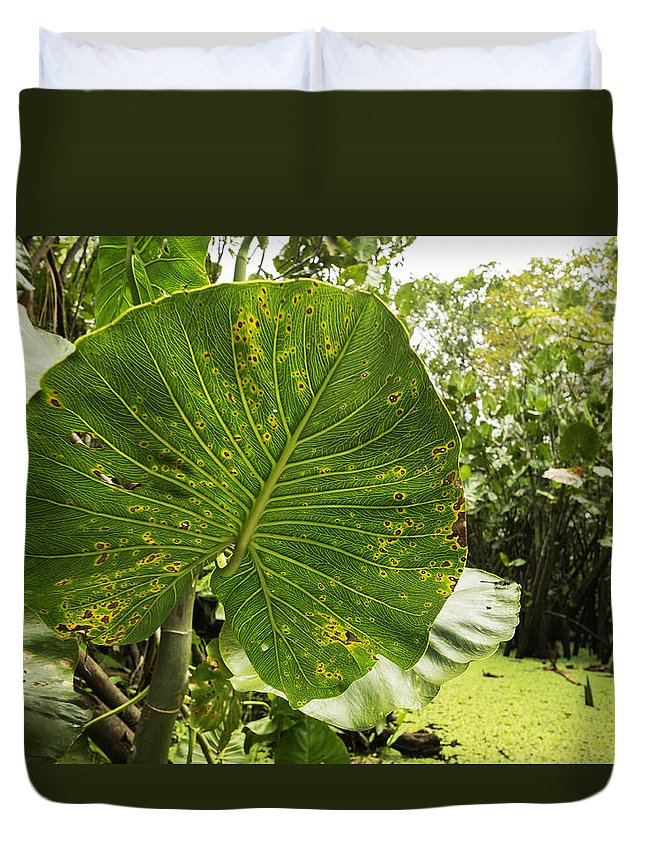 Leaf Duvet Cover featuring the photograph The Big Leaf by Eline Van Nes