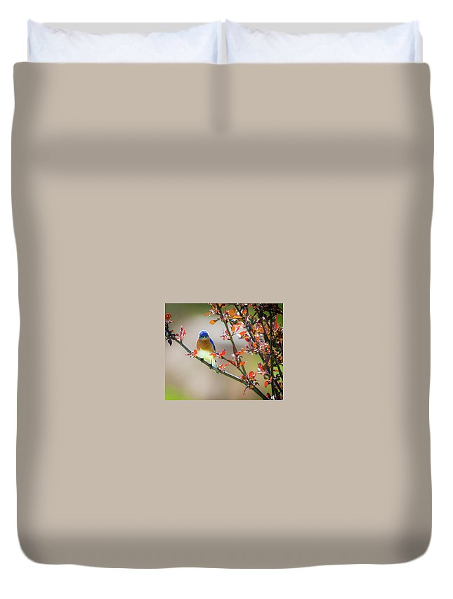 Eastern Male Bluebird Duvet Cover featuring the photograph The Bluebird by Heather Hubbard