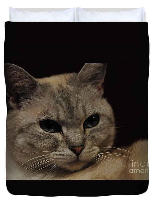 Nature Duvet Cover featuring the photograph The Cat by Daniela White