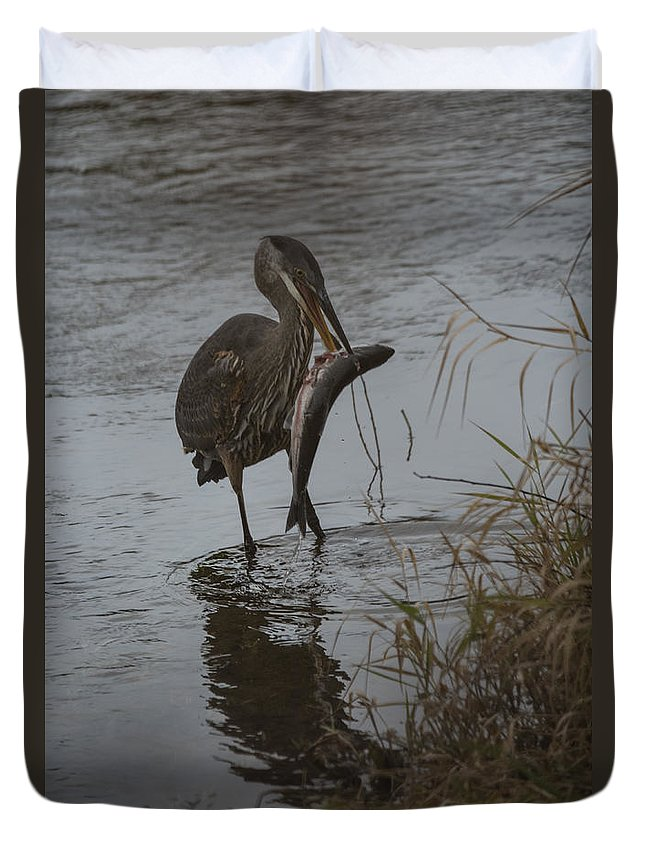 Heron Duvet Cover featuring the photograph The Catch by Rod Wiens