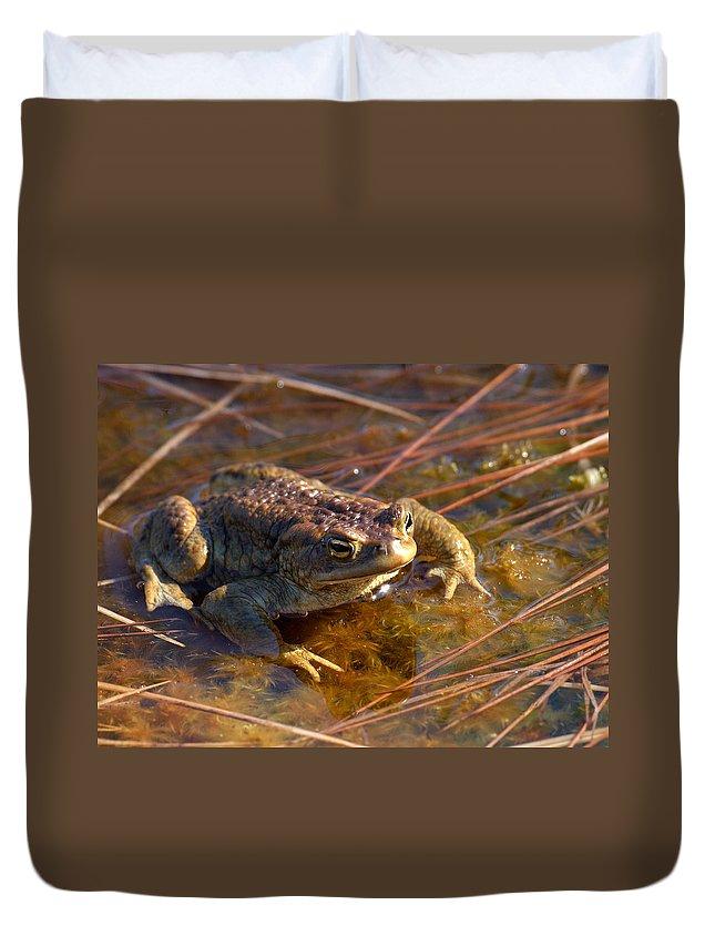 Lehtokukka Duvet Cover featuring the photograph The Common Toad 1 by Jouko Lehto