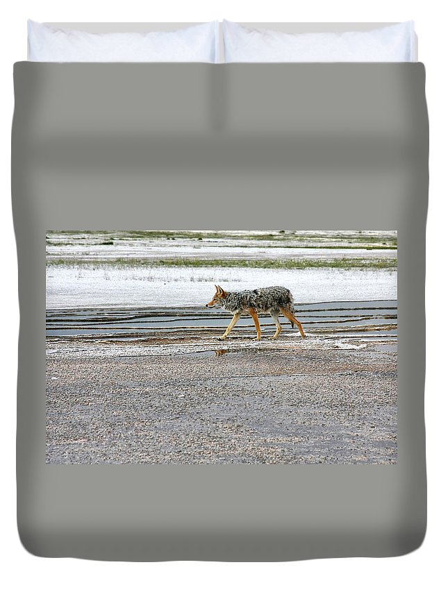 Coyote Duvet Cover featuring the photograph The Coyote - Dogs Are By Far More Dangerous by Christine Till