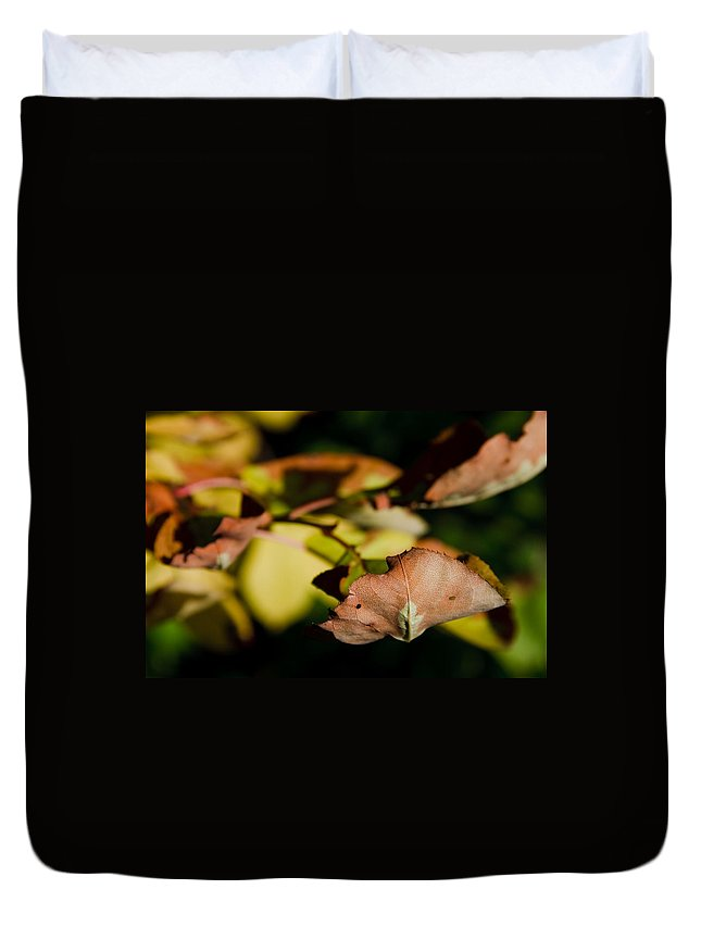 Fall Duvet Cover featuring the photograph The End Of Fall by Bob Mintie