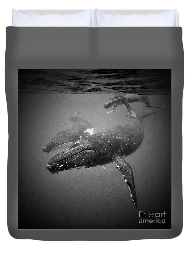 Humpback Duvet Cover featuring the photograph The Family by Tim Rock