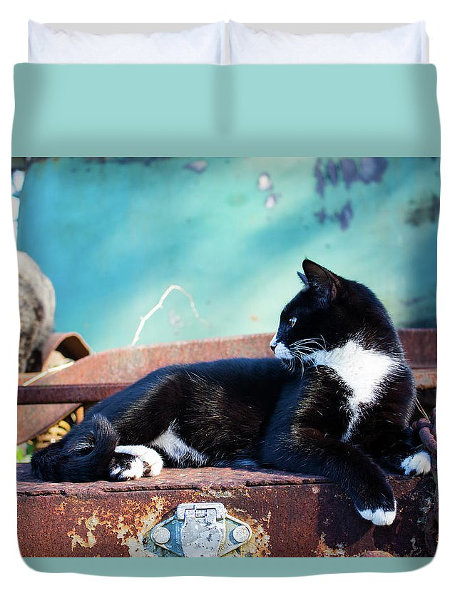 Cats Duvet Cover featuring the photograph The Ferals-1399 by Oonabot Photography