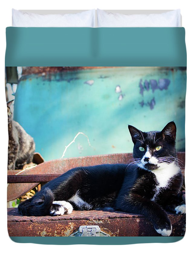 Cats Duvet Cover featuring the photograph The Ferals-1400 by Oonabot Photography