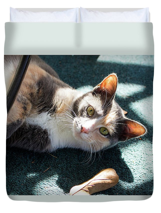 Cats Duvet Cover featuring the photograph The Ferals-1407 by Oonabot Photography