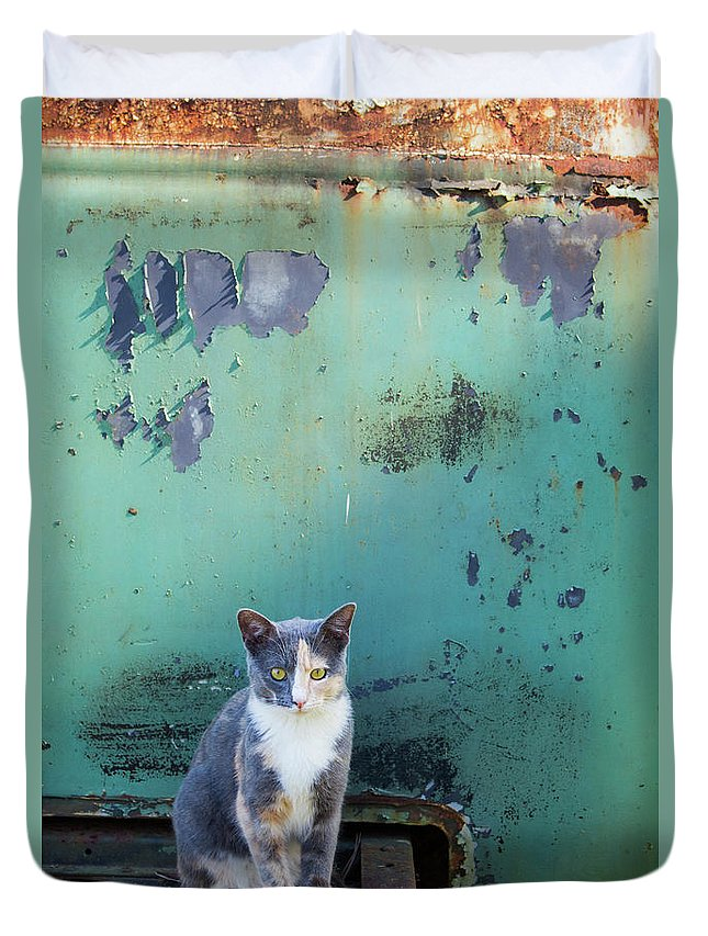 Cats Duvet Cover featuring the photograph The Ferals-1420 by Oonabot Photography