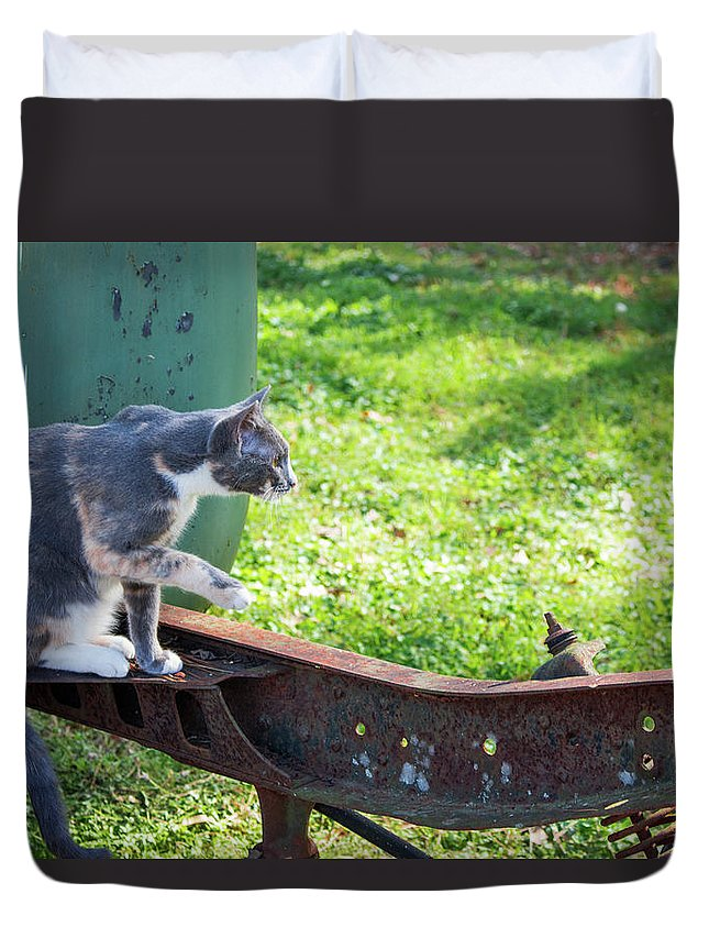 Cats Duvet Cover featuring the photograph The Ferals-1424 by Oonabot Photography