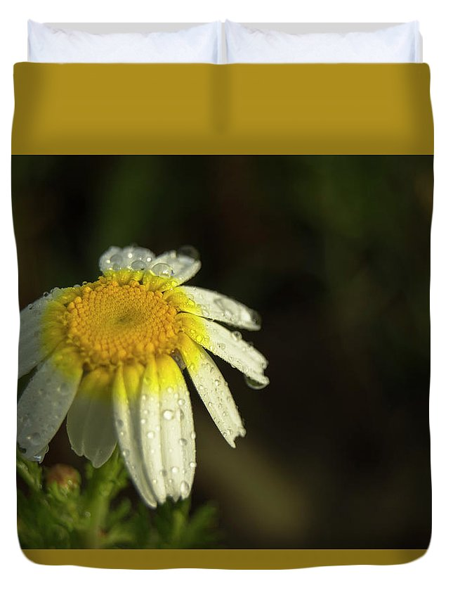 Daisy Duvet Cover featuring the photograph The First Light by Ignacio Leal Orozco