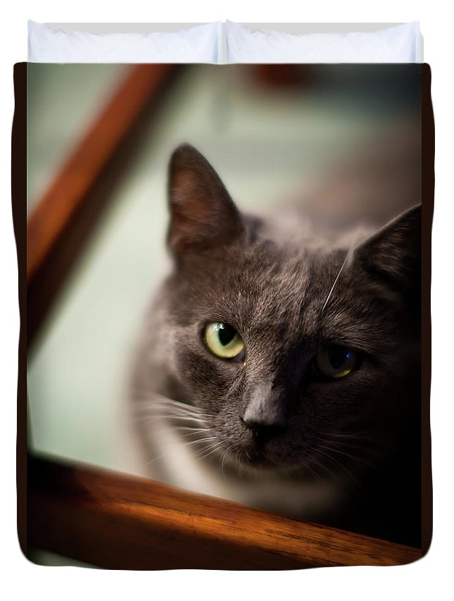 Cat Duvet Cover featuring the photograph The Gaze by Mike Reid