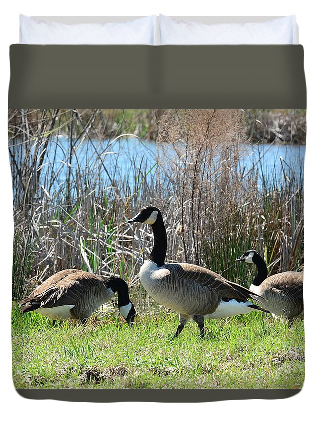 The Geese Are Back Duvet Cover featuring the photograph The Geese Are Back by Maria Urso
