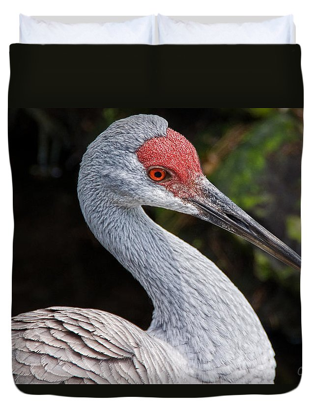 Bird Duvet Cover featuring the photograph The Greater Sandhill Crane by Christopher Holmes