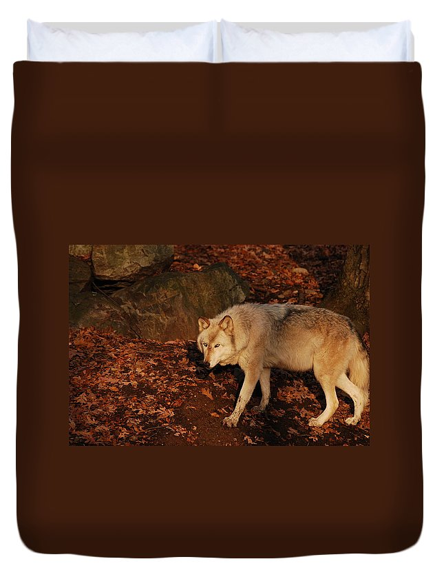 Wolf Duvet Cover featuring the photograph The Hunter by Lori Tambakis