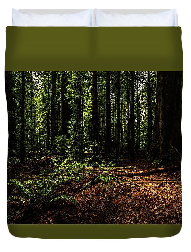 Redwood Duvet Cover featuring the photograph The Light In The Forest No. 2 by TL Mair
