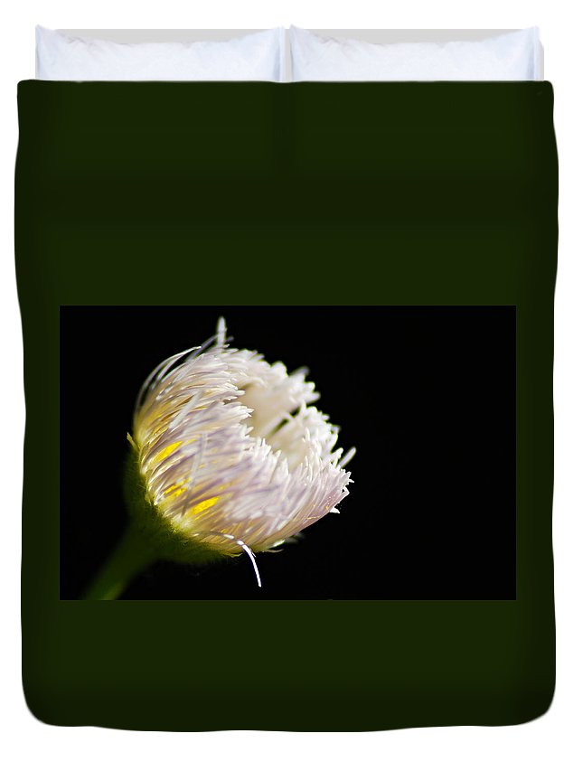 Fleabane Duvet Cover featuring the photograph The Light Within by Larry Ricker
